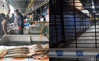 'From bats to snakes' China bans wildlife trade amid Wuhan coronavirus outbreak