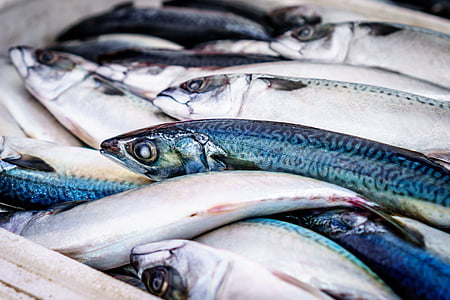 UAE fish markets now open for home deliveries