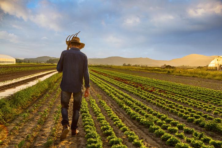 Benguet farmer donates 1,500 kilos of vegetables to his own community, city