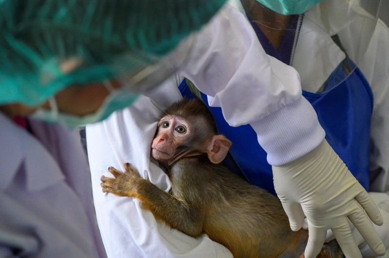 Thai scientists start monkey trials for COVID-19 vaccine