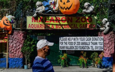 Malabon Zoo, Avilon Zoo cry for help amid the effects of COVID-19 crisis