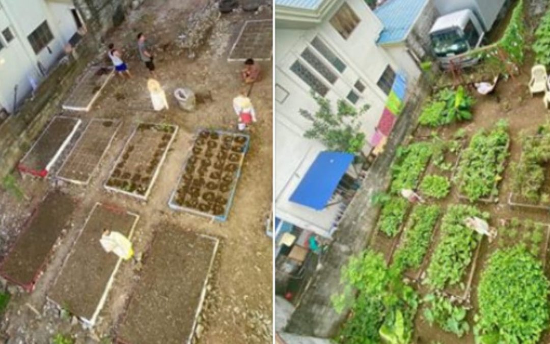LOOK: QC neighborhood transforms vacant lot to vegetable garden during enhanced community quarantine