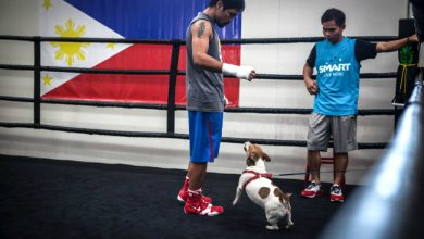 Photo of WATCH: Manny Pacquiao gives tribute to late dog Pacman in heartbreaking video