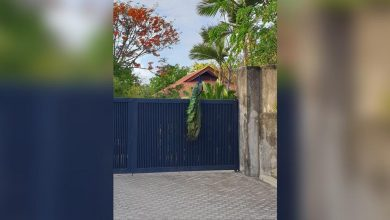 Photo of LOOK: Peacock seen on a house's gate in Muntinlupa