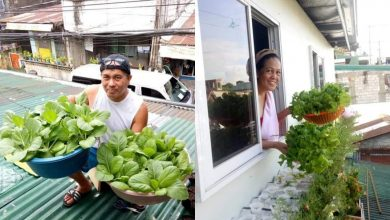 Photo of LOOK: Pinoy harvests fruits–and veggies–of his labor on roof garden