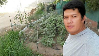 Photo of OG Plantito: OFW shows off six-year-old home garden in Al Ain