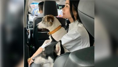 Photo of Heart Evangelista chases dog in high heels