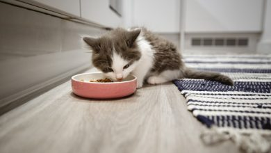 Photo of Pet kitten tests positive for COVID-19 in South Korea