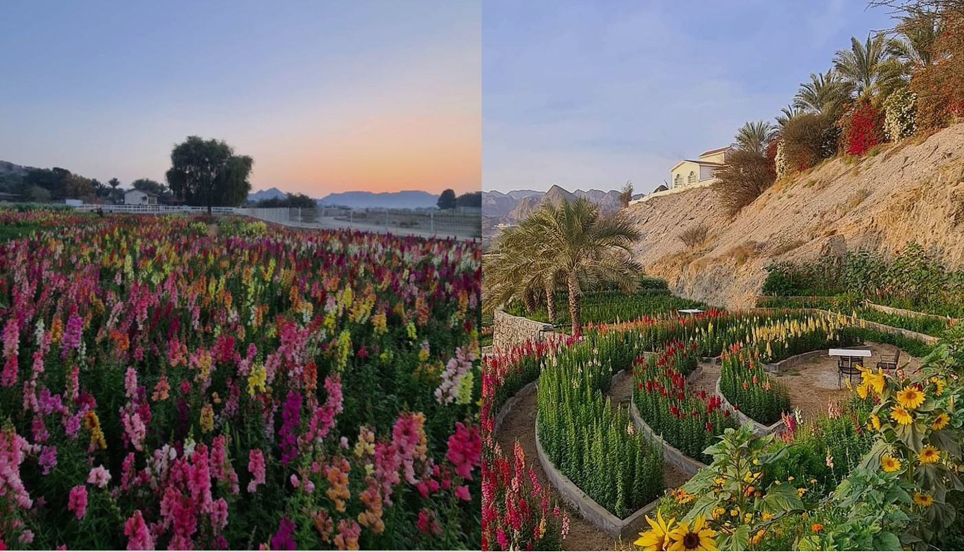 Secret flower garden in #UAE that'll transport you to paradise - The  Filipino Times